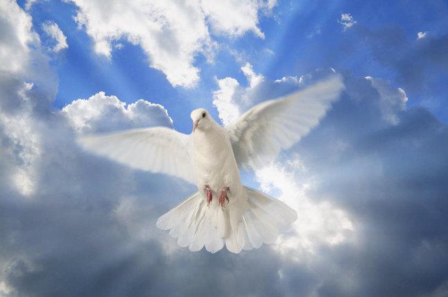 Dios guía nuestro espíritu
